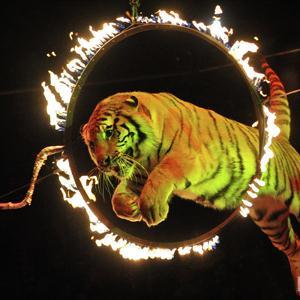 Цирки Любинского