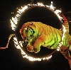 Цирки в Любинском