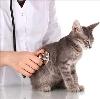 Ветеринарные клиники в Любинском